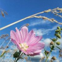 цветок :: Julia C.