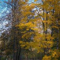Осень... :: Евгения Кирильченко