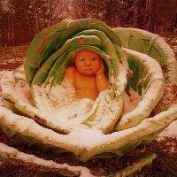 Ребёнок в капусте :: Елена Анатольевна Олюнина