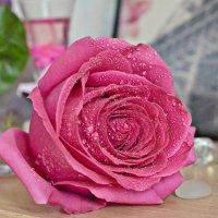 роза :: Стелла