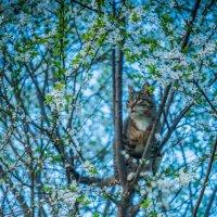 кошка - зверь :: Мария Корнилова