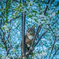 кошка в засаде :: Мария Корнилова