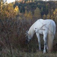 В поисках зеленой травы :: Светлана