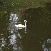 Прекрасные птицы-1. :: Руслан Грицунь