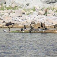 Морские птицы-15. :: Руслан Грицунь