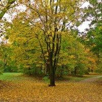 Листопад, листопад, Листья желтые летят.... :: Galina Dzubina