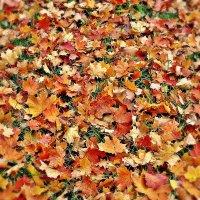 """""""Опавшие листья шуршат под ногами, Всю землю, укрыв разноцветным ковром,.."""" :: Galina Dzubina"""