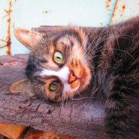Котя в лучах заходящего солнца. :: Татьяна ❧
