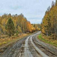 Осенняя дорожка :: Дмитрий Конев