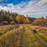 Собака, которая гуляет сама по себе :: Андрей Дворников