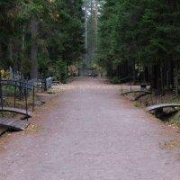 Комаровское кладбище.. :: tipchik