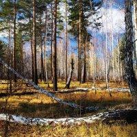 Сибирский осенний лес :: Александр Попов