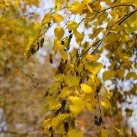 Осень золотая :: Алексей Масалов