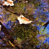 Осеннее отражение :: Мishka 298