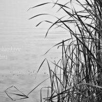 вода :: Inna Прибушаускайте