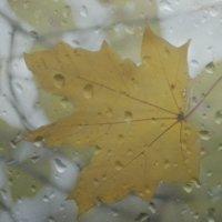 Заплакать что ли мне, когда я вижу клен в окне.......... :: Tatiana Markova