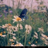 бабочка :: Юлия Дягилева