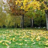 На ковре из желтых листьев .... :: Маргарита ( Марта ) Дрожжина