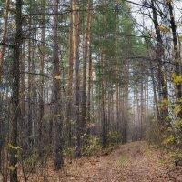 Осенний лес :: Yasnji