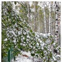 Возвращаясь к первому снегу :: Константин Фролов