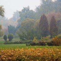 осень :: Светлана З