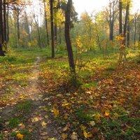 Когда солнце помогает :: Андрей Лукьянов