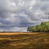 Между полем и лесом :: Лариса Макарова