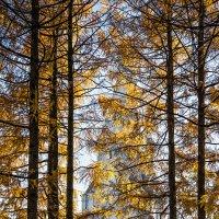 В мечтах витаю тёплых, безмятежных... :: Ирина Данилова