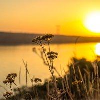 Утренний свет осени :: Denis Aksenov