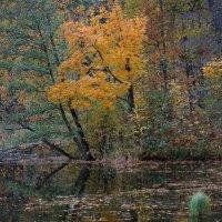 в тишине  у пруда :: Валентина Папилова