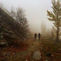 Жемчужные сети тумана  укутали сказочный лес. :: Anna Gornostayeva