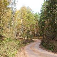 Извилистая дорога в лесу. :: Борис Митрохин