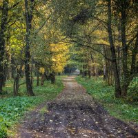 Дорога в осень :: Elena Ignatova