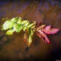 Осенний листок :: Андрей Заломленков