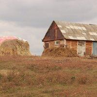 Деревня :: никита кичапин