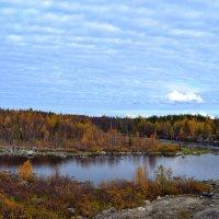 У берёз и сосен тихо бродит осень... :: Ольга