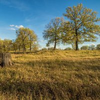Осень :: Saloed Sidorov-Kassil