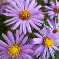 Осенние цветы :: Миша Любчик