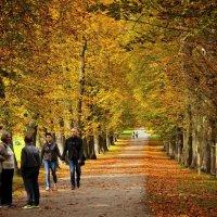 Золотая осень :: Svetlana Sneg