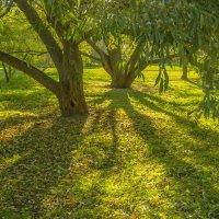 Таинственный лес :: Елена Бразис