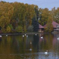 Лебединая осень :: Наталья Левина