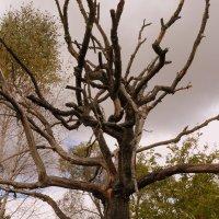 деревянный скелет :: Александр Прокудин