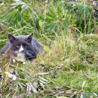 Сердитый кот в засаде... :: Елена