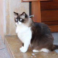 Жирный кот :: Максим Ноздрачев