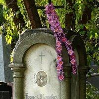 Забытая могила :: Владимир Бровко
