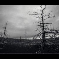 Dead Forest :: алексей афанасьев