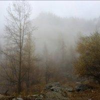 Синий туман похож на обман... :: Anna Gornostayeva