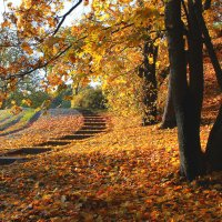 Золотой листопад и солнечная лестница. :: Марина Шубина