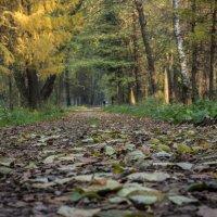 Осенняя дорога :: Elena Ignatova