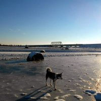 Проба первого льда :: Николай Туркин